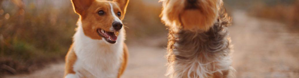 dogs cbd canine hemp tincture pet CBD